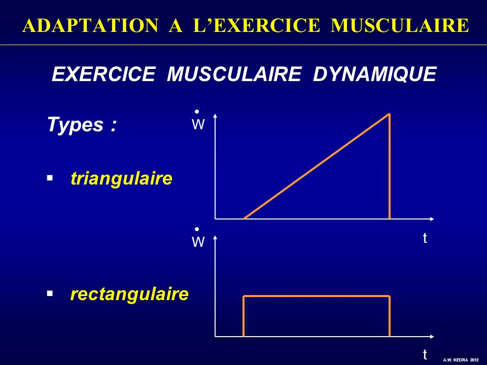 EXERCICE MUSCULAIRE DYNAMIQUE Types : triangulaire rectangulaire t t W W A.W. KEDRA 2012 ADAPTATION A LEXERCICE MUSCULAIRE
