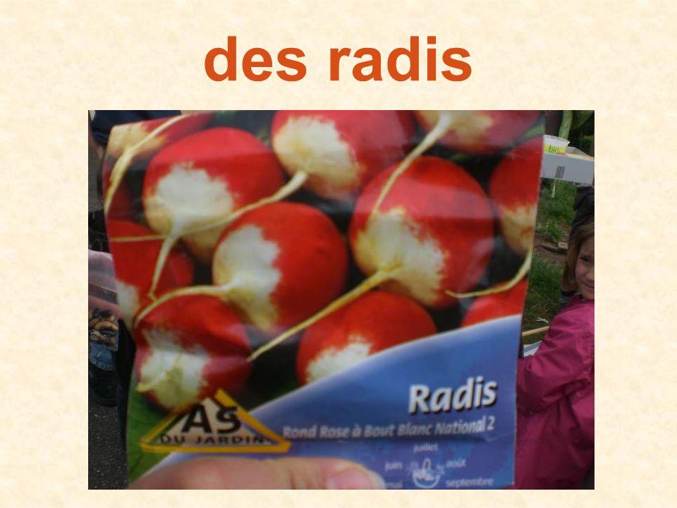 des radis