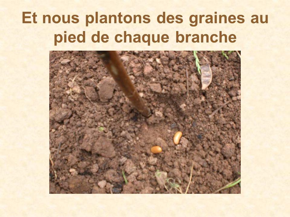 Et nous plantons des graines au pied de chaque branche