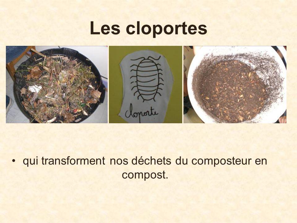 Les cloportes qui transforment nos déchets du composteur en compost.