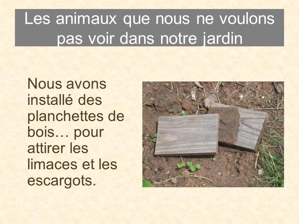 Les animaux que nous ne voulons pas voir dans notre jardin Nous avons installé des planchettes de bois… pour attirer les limaces et les escargots.