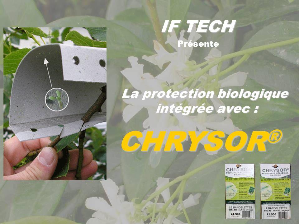 IF TECH La nature protège la nature Cycle annuel des chrysopes