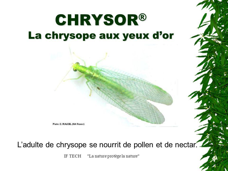IF TECH La nature protège la nature Lœuf de chrysope Lœuf est pondu sur un pédicelle.