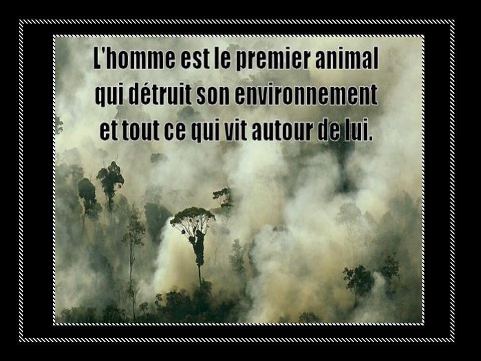 La déforestation va limiter cette biodiversité.