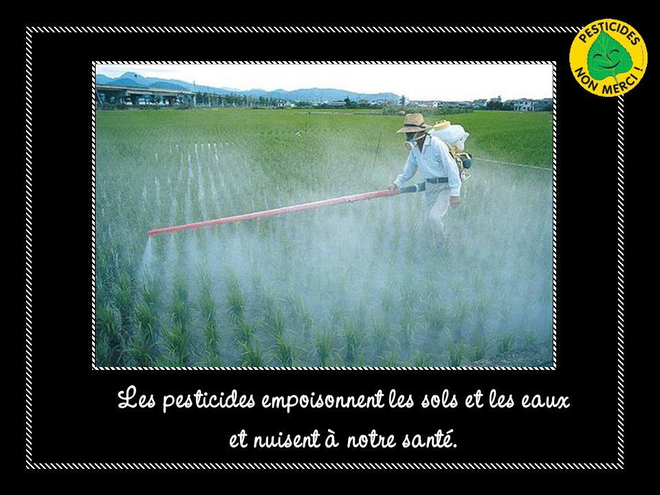 Les OGM qui augmentent l'usage des pesticides, ne règlent ni la pauvreté, ni la faim dans le monde
