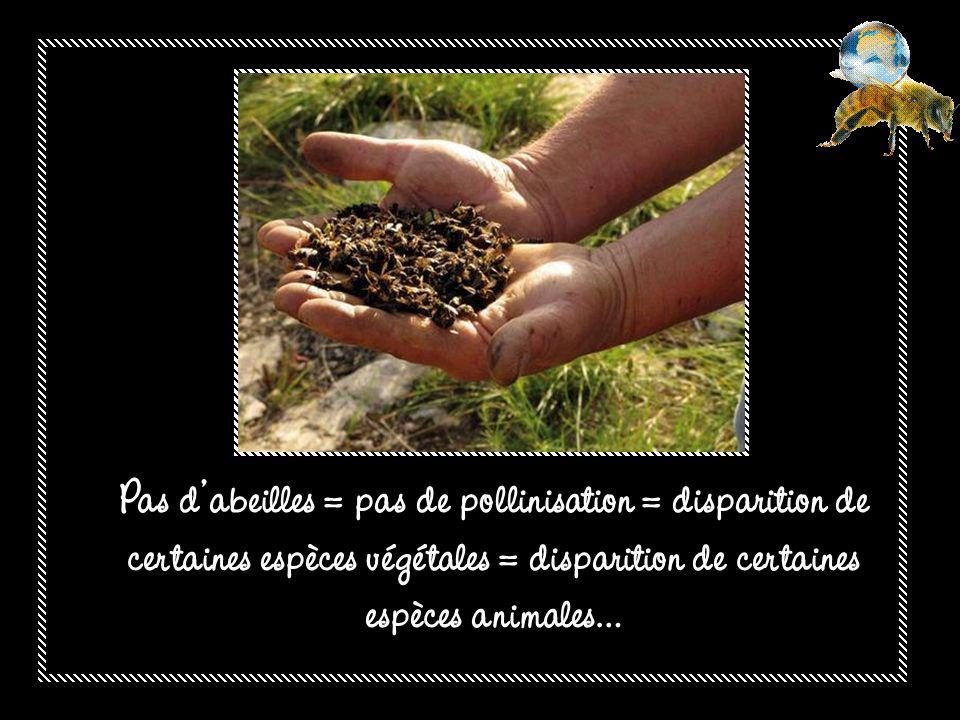 Les abeilles assurent la survie ou lévolution de plus de 80% des espèces végétales dans le monde.