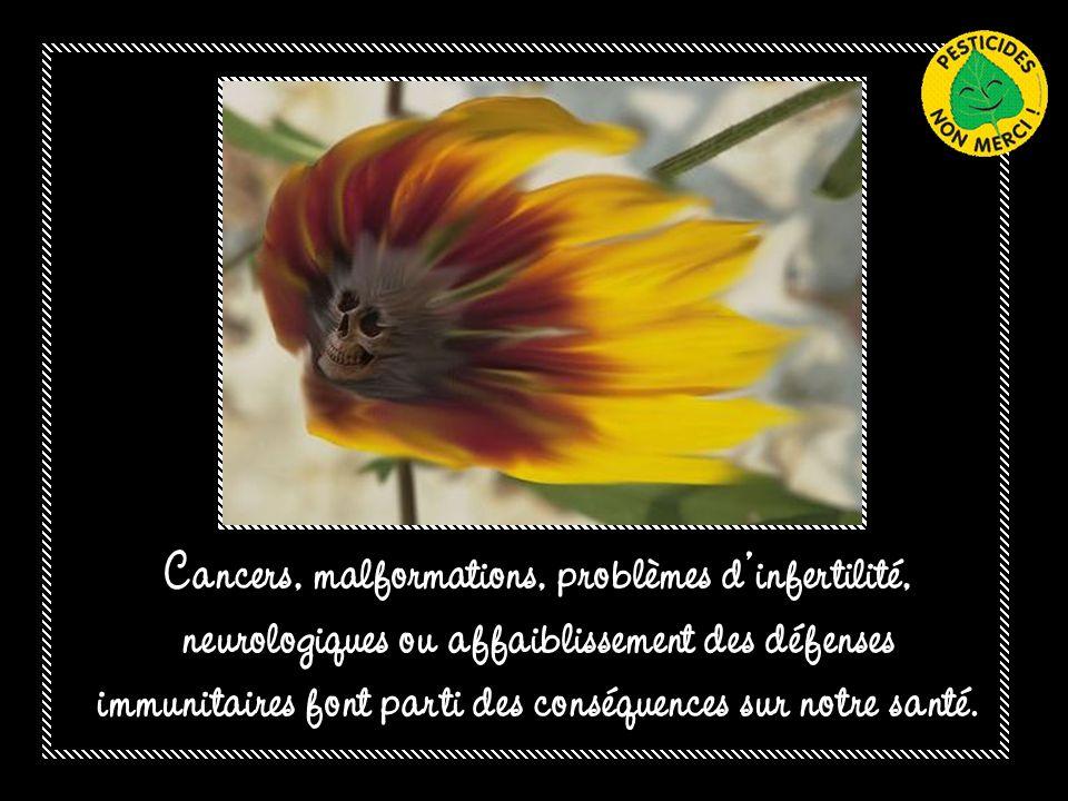 Pas dabeilles = pas de pollinisation = disparition de certaines espèces végétales = disparition de certaines espèces animales…