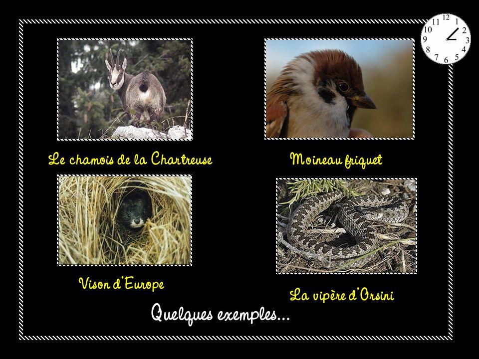 La moitié des 35 200 espèces animales et végétales recensées en France est menacée dextinction Macareux moine