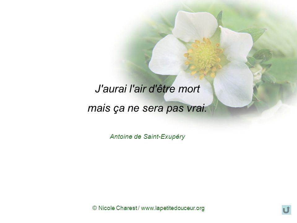 © Nicole Charest / www.lapetitedouceur.org Priez, souriez, pensez à moi, priez pour moi. Que mon nom soit prononcé à la maison comme il l'a toujours é