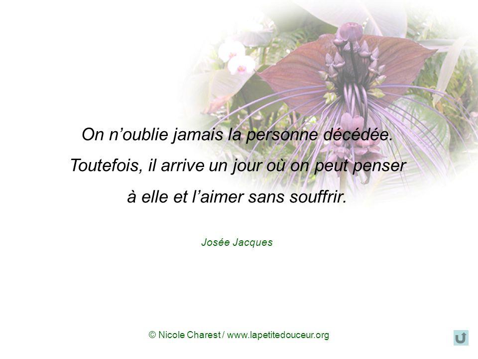 © Nicole Charest / www.lapetitedouceur.org Imaginez-vous… Imaginez-vous quun ange est à vos côtés en ce moment… Silence... Soyez calme et pensez à tou