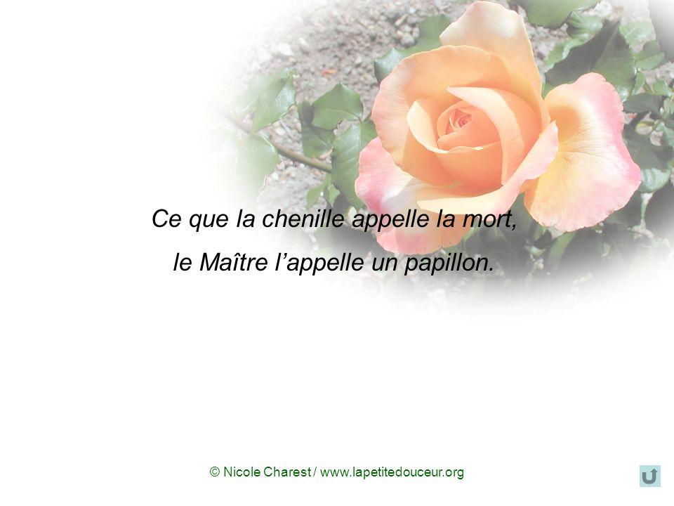© Nicole Charest / www.lapetitedouceur.org Ce que la chenille appelle la mort, le Maître lappelle un papillon.