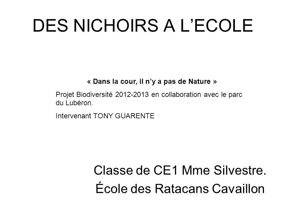 DES NICHOIRS A LECOLE Classe de CE1 Mme Silvestre. École des Ratacans Cavaillon « Dans la cour, il ny a pas de Nature » Projet Biodiversité 2012-2013