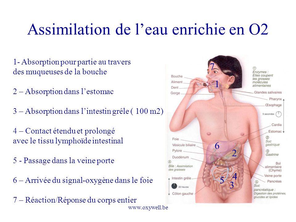 www.oxywell.be Assimilation de leau enrichie en O2 2 3 4 6 1 1- Absorption pour partie au travers des muqueuses de la bouche 2 – Absorption dans lesto