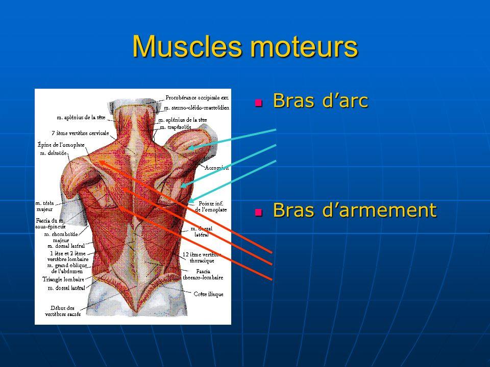 Muscles moteurs Bras darc Bras darc Bras darmement Bras darmement