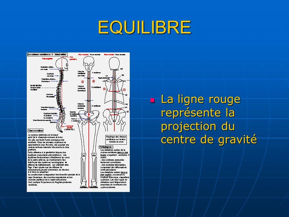 EQUILIBRE La ligne rouge représente la projection du centre de gravité La ligne rouge représente la projection du centre de gravité