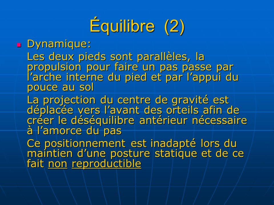 Équilibre (2) Dynamique: Dynamique: Les deux pieds sont parallèles, la propulsion pour faire un pas passe par larche interne du pied et par lappui du