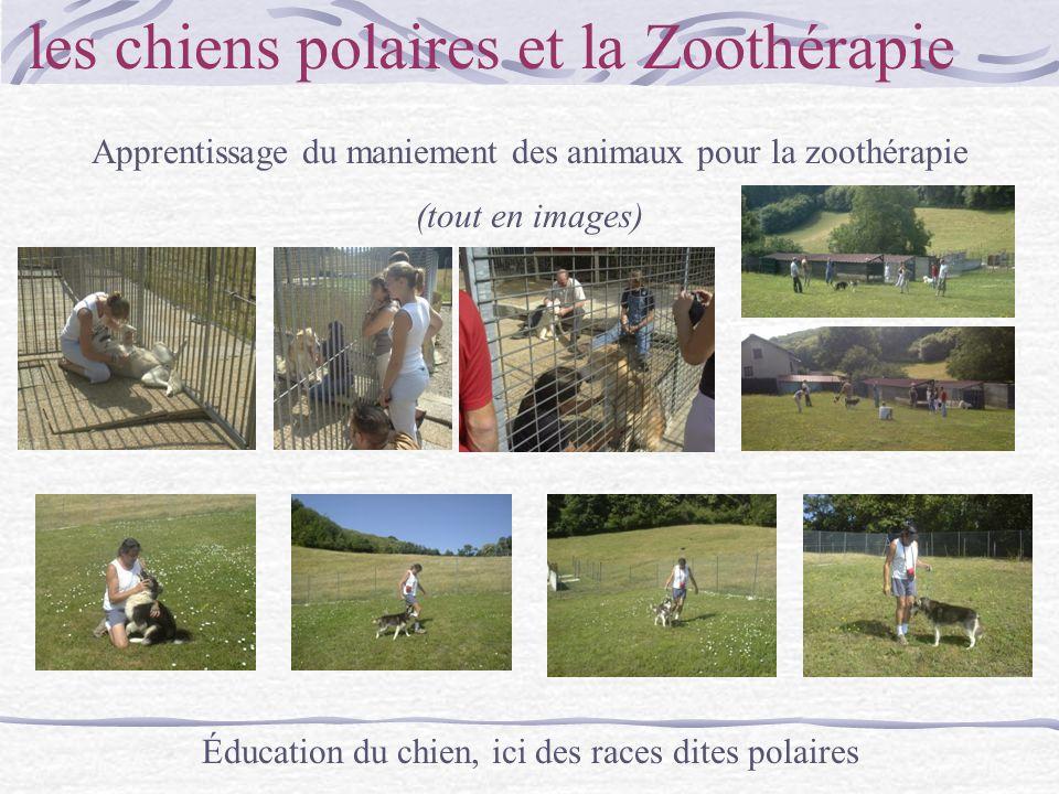 les chiens polaires et la Zoothérapie Apprentissage du maniement des animaux pour la zoothérapie (tout en images) Éducation du chien, ici des races di
