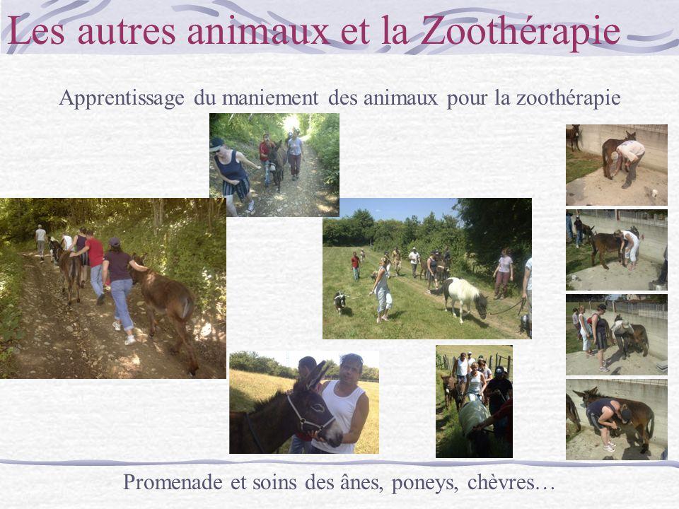 Les autres animaux et la Zoothérapie Apprentissage du maniement des animaux pour la zoothérapie Promenade et soins des ânes, poneys, chèvres…