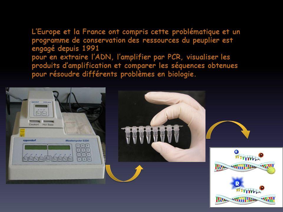 LEurope et la France ont compris cette problématique et un programme de conservation des ressources du peuplier est engagé depuis 1991 pour en extraire lADN, lamplifier par PCR, visualiser les produits damplification et comparer les séquences obtenues pour résoudre différents problèmes en biologie.