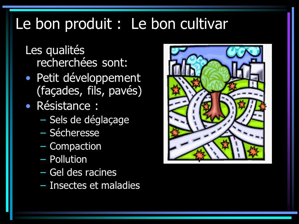 Le bon produit : Le bon cultivar Les qualités recherchées sont: Petit développement (façades, fils, pavés) Résistance : –Sels de déglaçage –Sécheresse