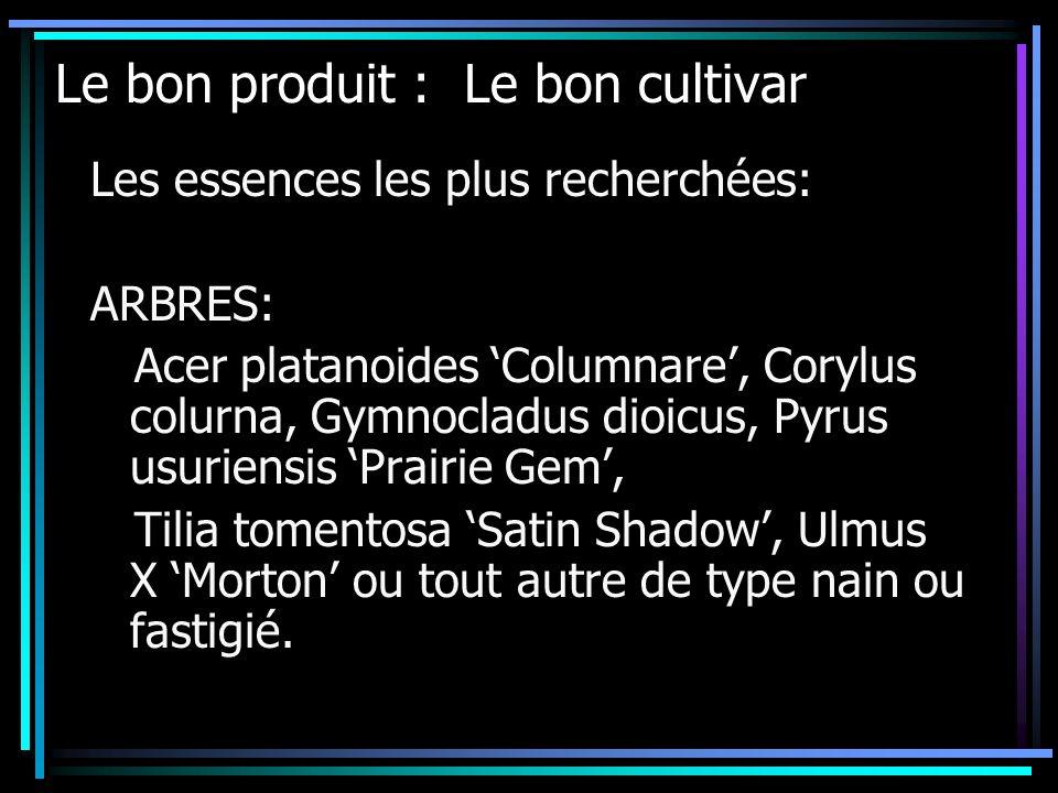 Les essences les plus recherchées: ARBRES: Acer platanoides Columnare, Corylus colurna, Gymnocladus dioicus, Pyrus usuriensis Prairie Gem, Tilia tomen