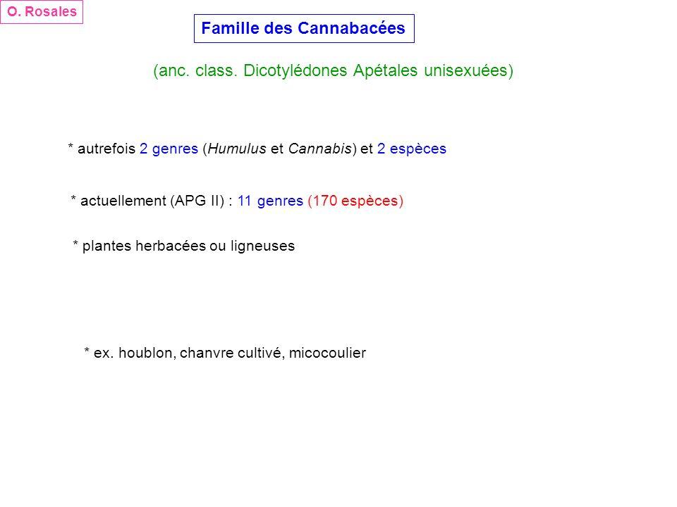 Famille des Cannabacées (anc. class. Dicotylédones Apétales unisexuées) O. Rosales * autrefois 2 genres (Humulus et Cannabis) et 2 espèces * actuellem