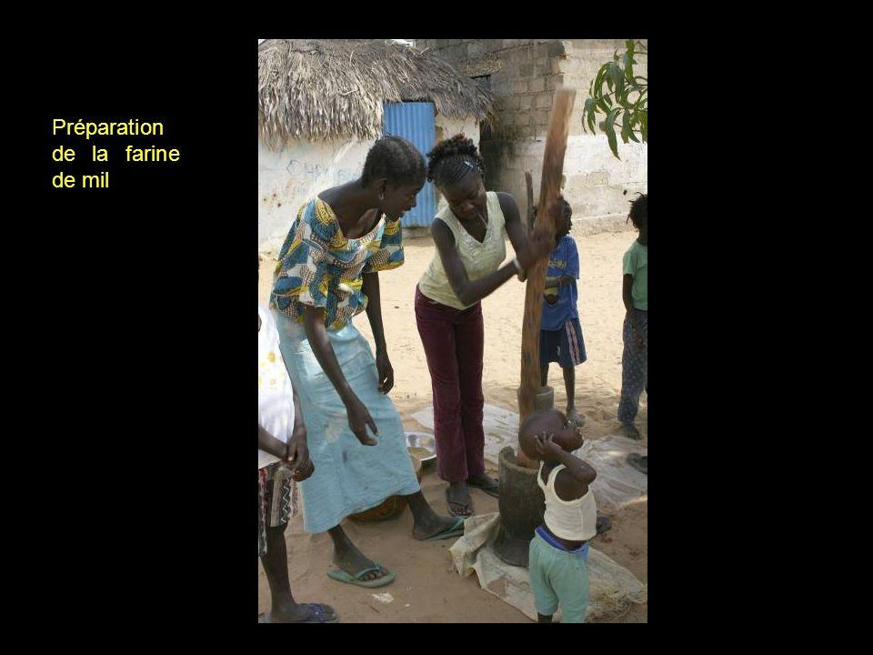 Récolte du mil Le mil, larachide et les pastèques sont les principales cultures de lîle