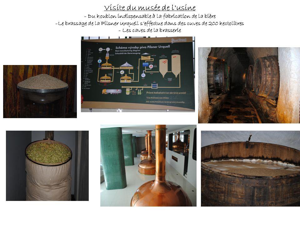 Visite du musée de l'usine - Du houblon indispensable à la fabrication de la bière -Le brassage de la Pilsner Urquell seffectue dans des cuves de 200