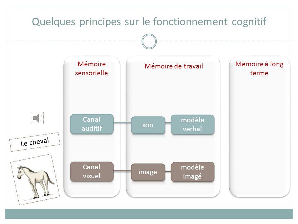 Mémoire sensorielle Mémoire de travail Mémoire à long terme Quelques principes sur le fonctionnement cognitif Le cheval