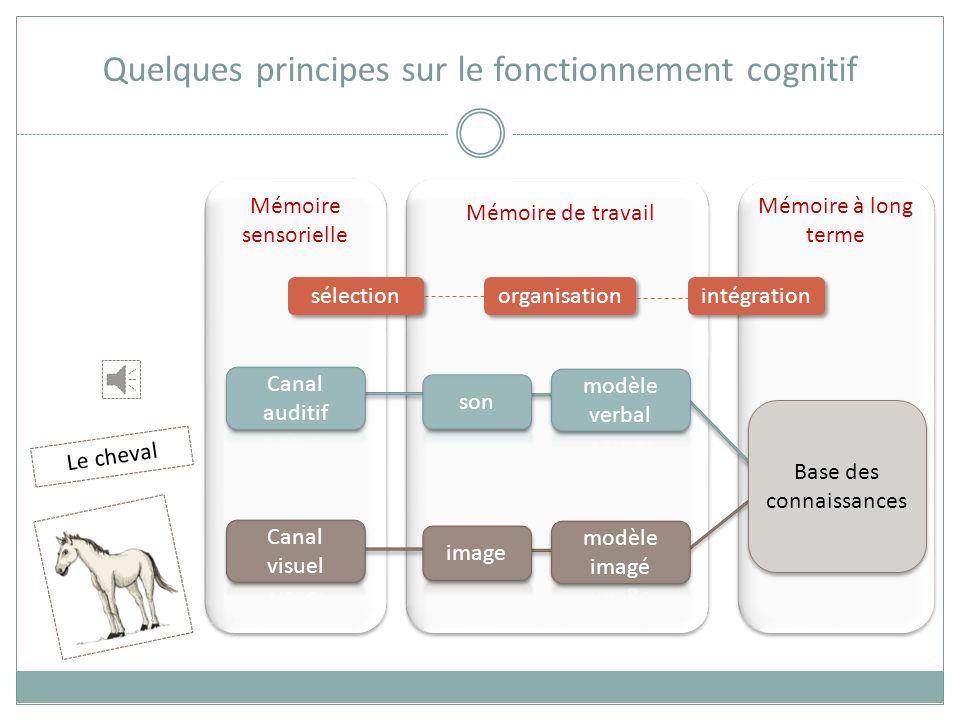 Mémoire sensorielle Mémoire de travail Mémoire à long terme Base des connaissances Quelques principes sur le fonctionnement cognitif Le cheval