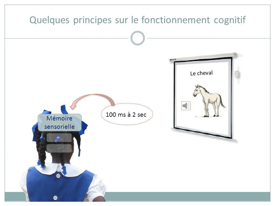 Quelques principes sur le fonctionnement cognitif vue ouïe odorat toucher Mémoire sensorielle Le cheval