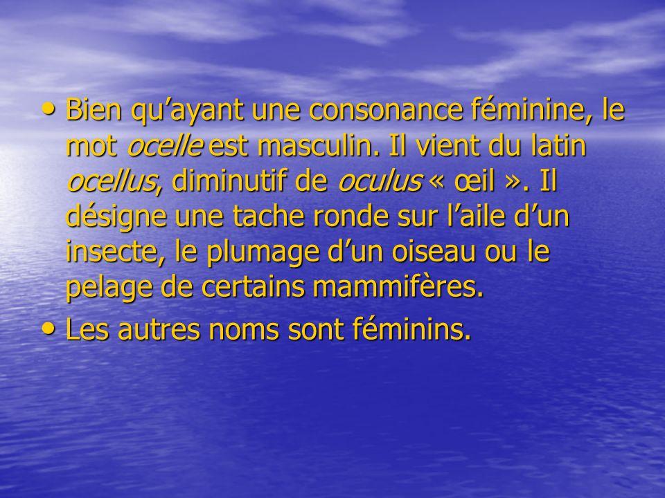 Bien quayant une consonance féminine, le mot ocelle est masculin. Il vient du latin ocellus, diminutif de oculus « œil ». Il désigne une tache ronde s