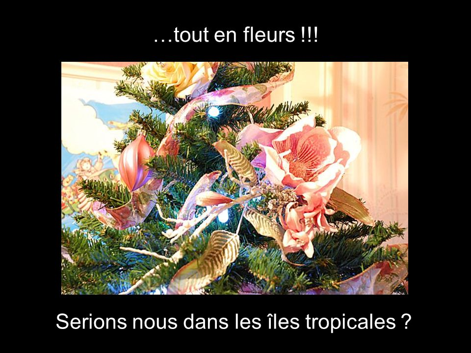…tout en fleurs !!! Serions nous dans les îles tropicales ?