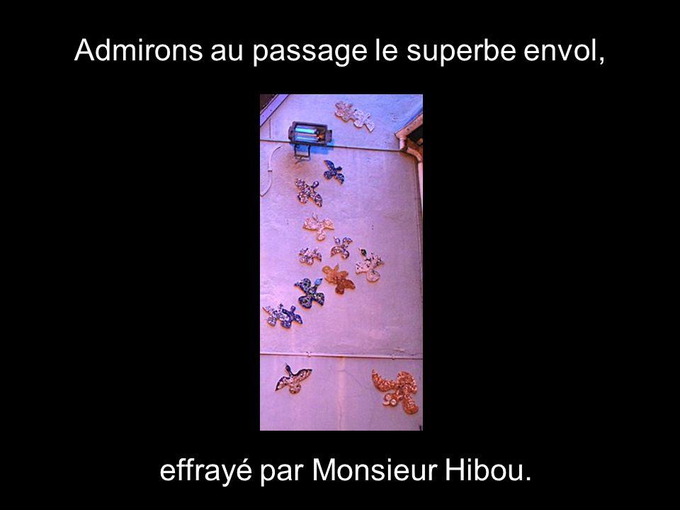 Admirons au passage le superbe envol, effrayé par Monsieur Hibou.