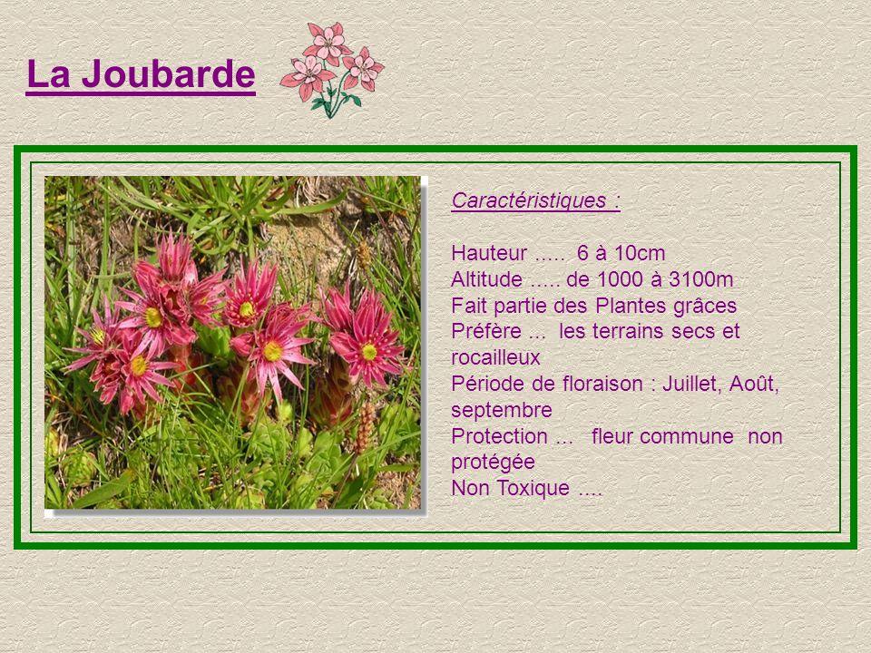 Tussilage Caractéristiques : Hauteur..... 10 à 15cm Altitude..... de 800 à 2600m Préfère...les clairières et les prairie Période de floraison : Printe