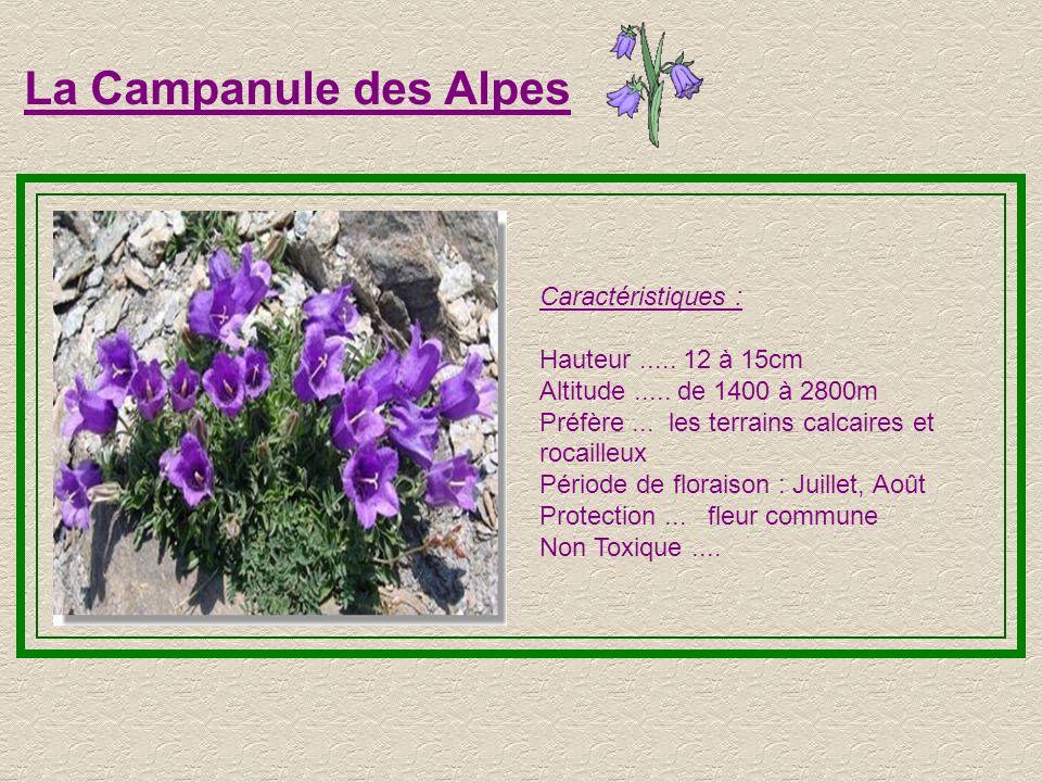 La Joubarde Caractéristiques : Hauteur..... 6 à 10cm Altitude..... de 1000 à 3100m Fait partie des Plantes grâces Préfère... les terrains secs et roca