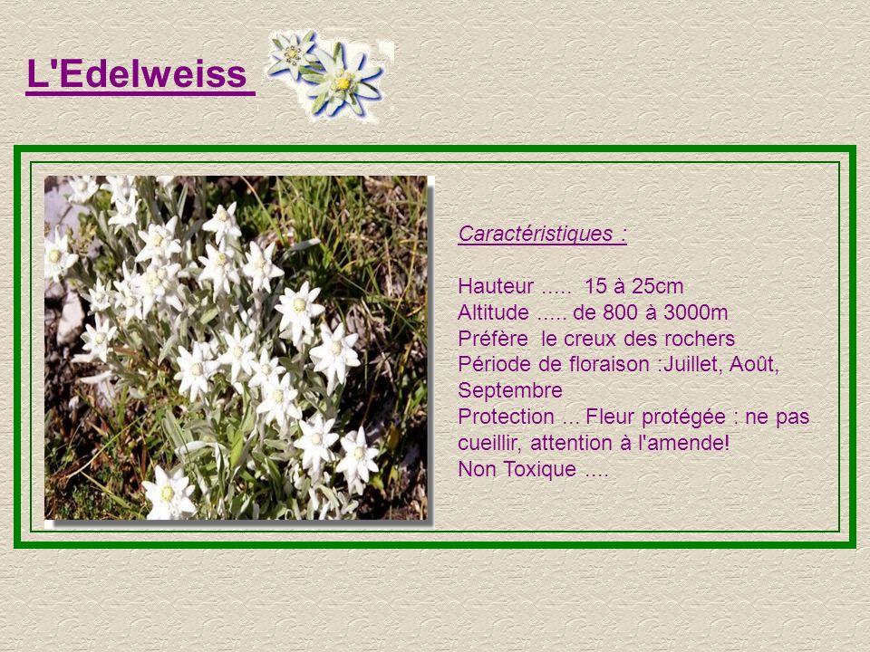 L'Aster des Alpes Caractéristiques : Hauteur..... de 6 à 15cm Altitude..... maxi... 3000m Période de floraison : Juillet, Août, Septembre Terrains sec