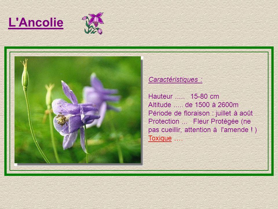 L Ancolie Caractéristiques : Hauteur.....15-80 cm Altitude.....