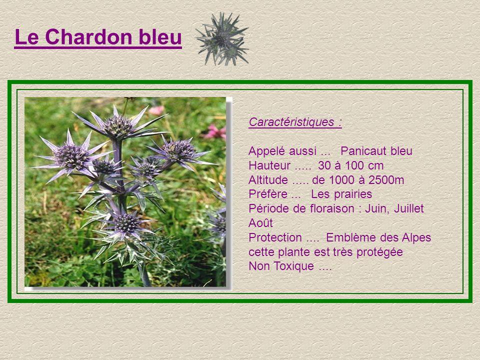 L'Orchis tachetée Caractéristiques : Hauteur..... 15 à 20 cm Altitude..... de 800 à 2200m Préfère... Les sols calcaires Période de floraison : Juin, J