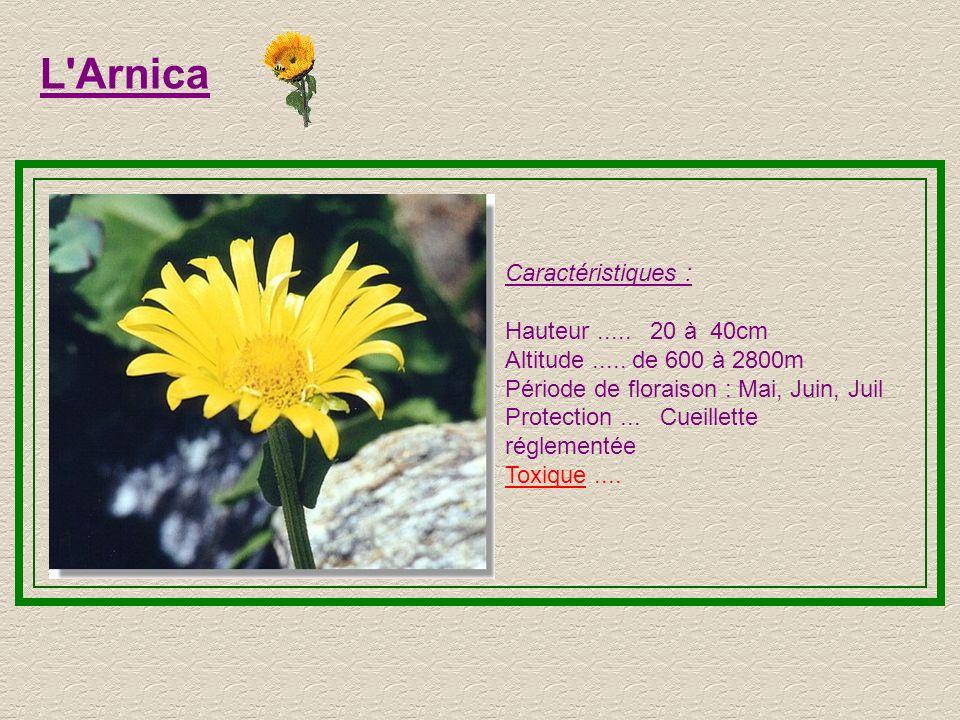 L'Ancolie Caractéristiques : Hauteur..... 15-80 cm Altitude..... de 1500 à 2600m Période de floraison : juillet à août Protection... Fleur Protégée (n