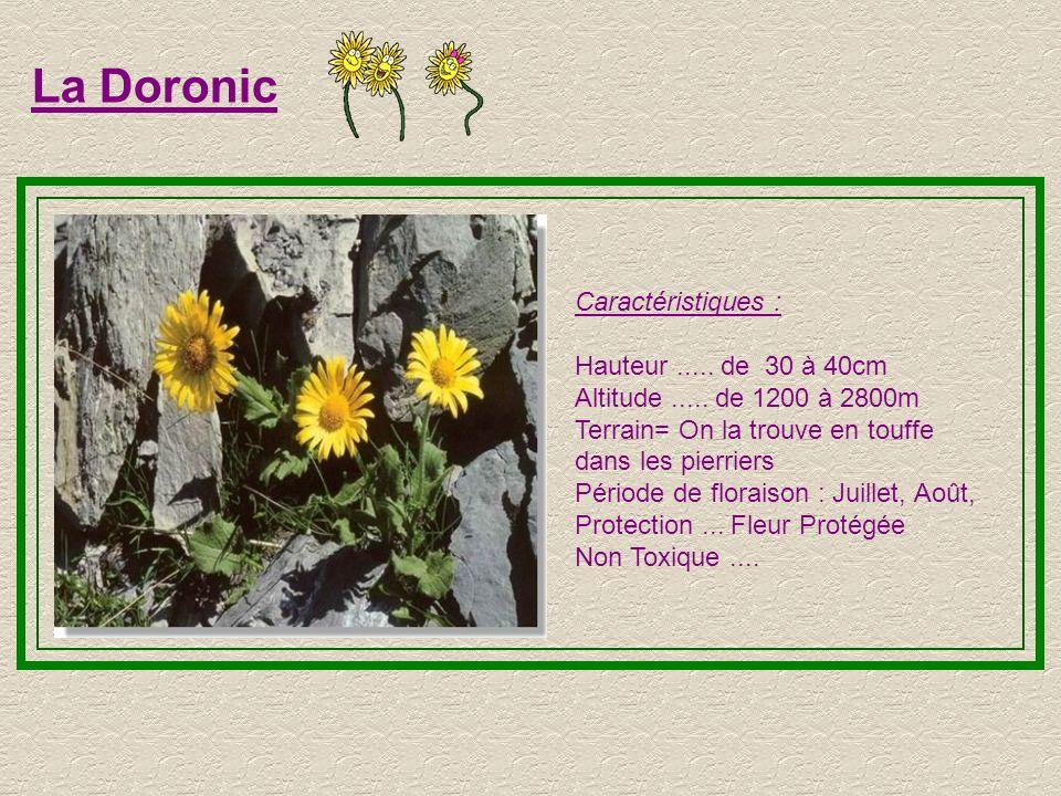 Saxifrage Caractéristiques : Hauteur..... de 5 à 20cm Altitude..... de 1000 à 3150m Préfère les milieux humides Période de floraison :Juin, Juillet, A