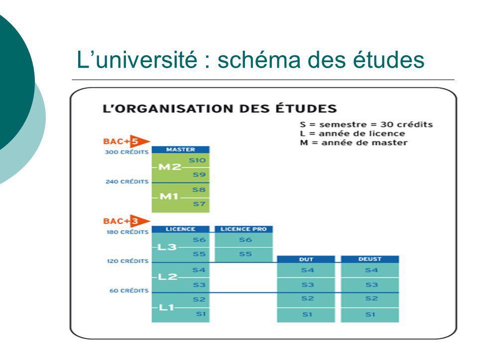 Luniversité : schéma des études