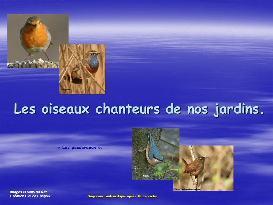 Les oiseaux chanteurs de nos jardins.Images et sons du Net.