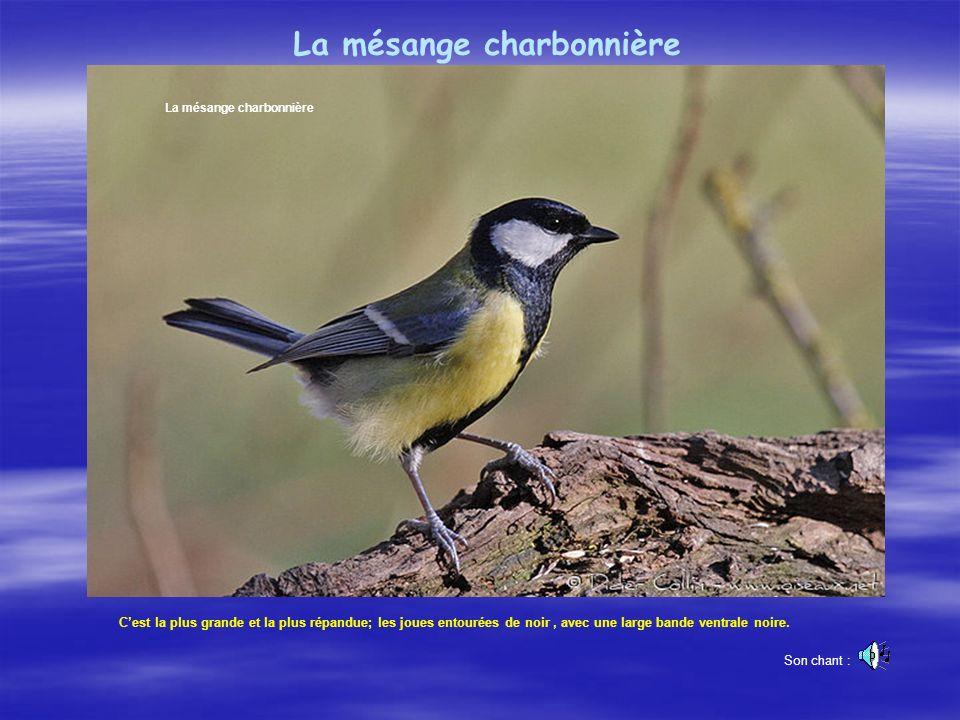 «Dans un monde de plus en plus agité et de moins en moins poétique, écouter et regarder vivre les oiseaux nous apporte l évasion et la paix. » René Ch
