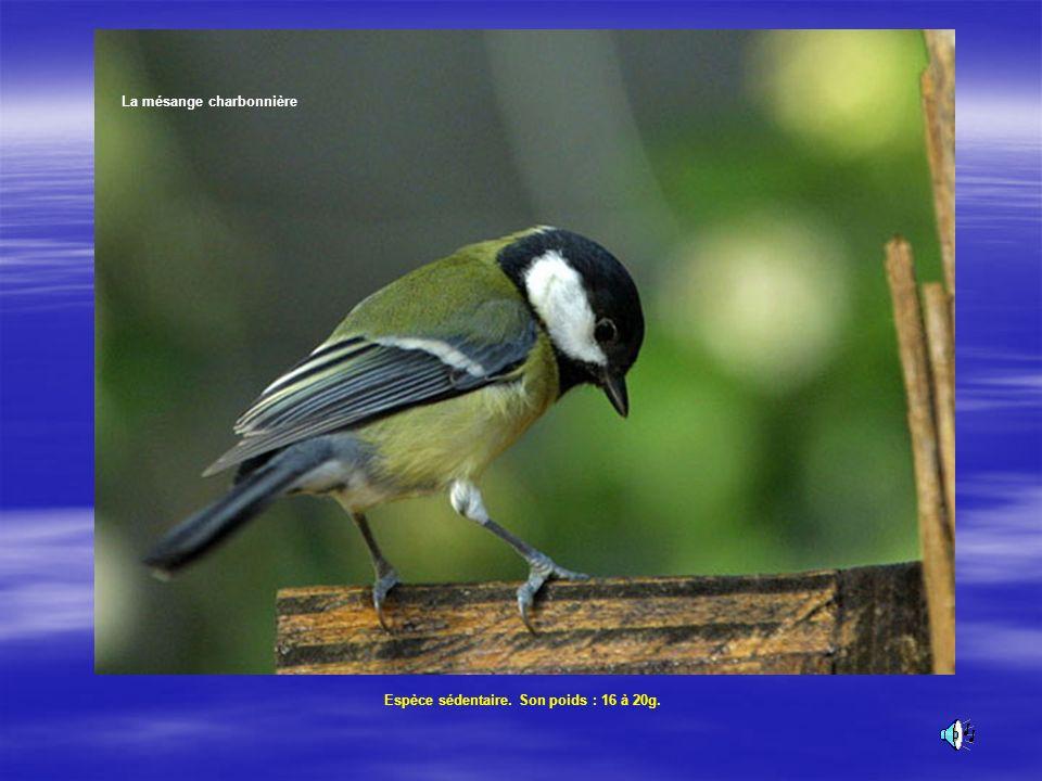 Bibliographie: Nourrir et abriter les oiseaux dAndré Mauxion Web Ornitho.