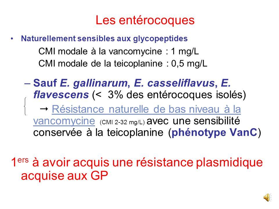 Antibiothérapie des entérocoques