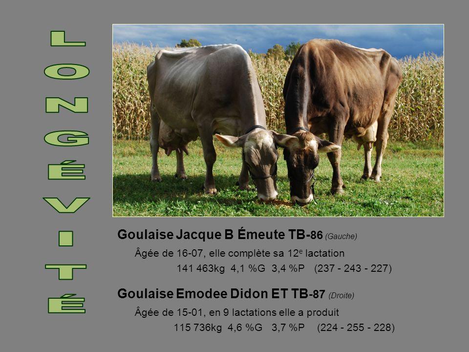 Goulaise Jacque B Émeute TB- 86 (Gauche) Âgée de 16-07, elle complète sa 12 e lactation 141 463kg 4,1 %G 3,4 %P (237 - 243 - 227) Goulaise Emodee Dido