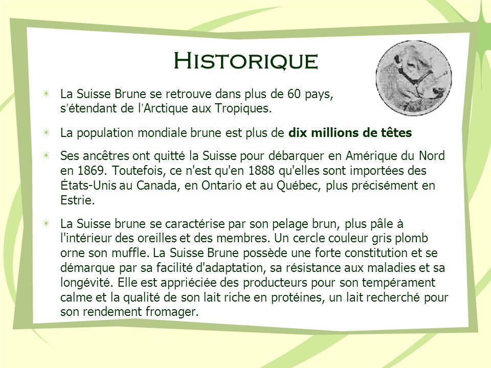 Historique La Suisse Brune se retrouve dans plus de 60 pays, s é tendant de l Arctique aux Tropiques. La population mondiale brune est plus de dix mil