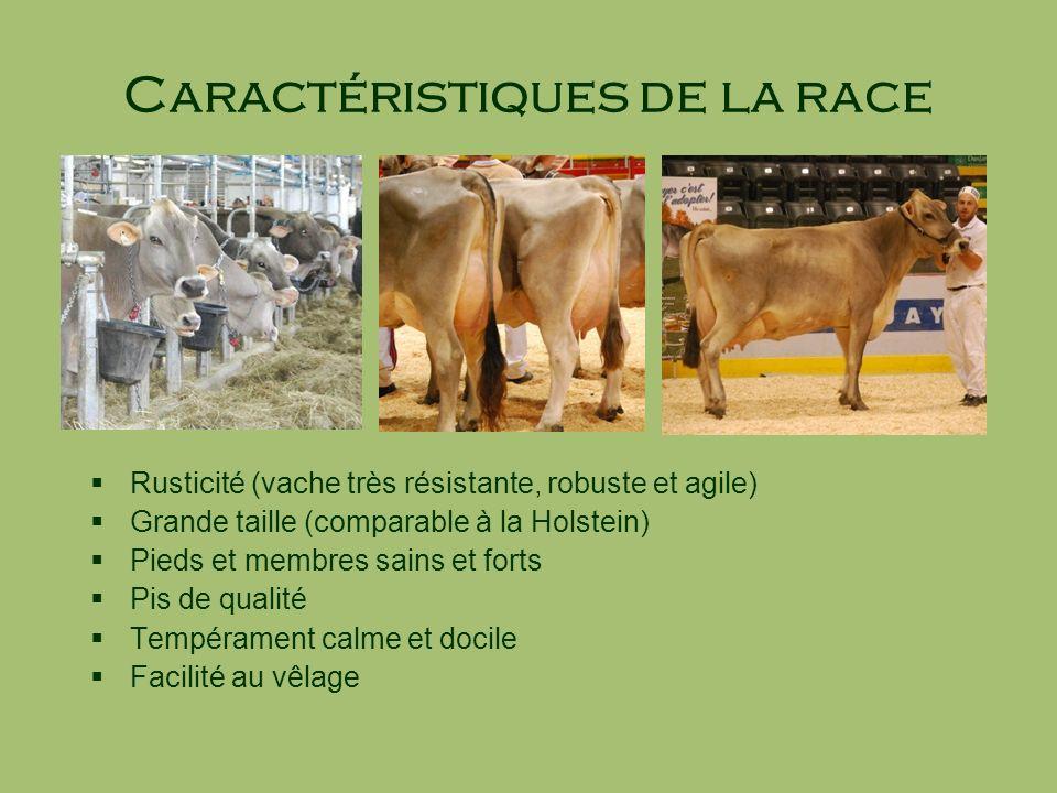 Caractéristiques de la race Rusticité (vache très résistante, robuste et agile) Grande taille (comparable à la Holstein) Pieds et membres sains et for