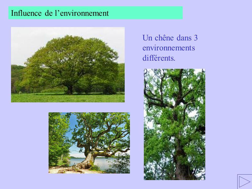 Un chêne dans 3 environnements différents.